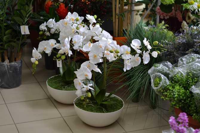 Композиции с белыми орхидеями