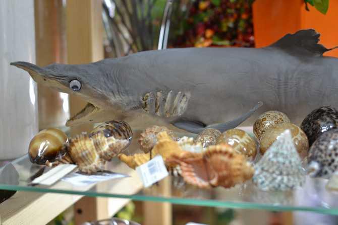 Акула в интернет-магазине