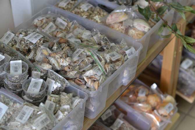 Фассованные морские ракушки
