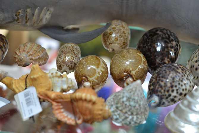 Купить морские раковины