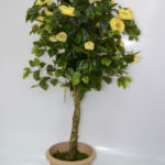 Flora74_6107-(66)