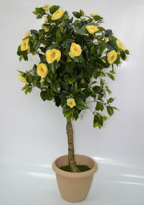 Дерево Камелия с жёлтыми цветами