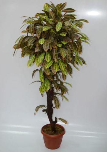 """Искусственное дерево """"Кротон"""" 1,6 м"""