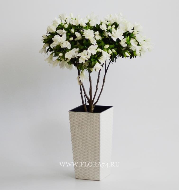 Родедендрон цветущий