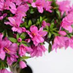 Купить искусственные цветы