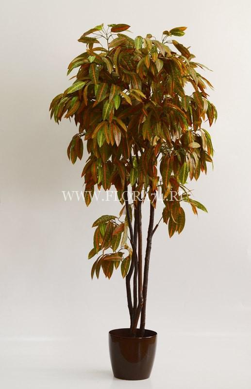 Дерево — Кротон на натуральных стволах. Высота — 1,7 м.