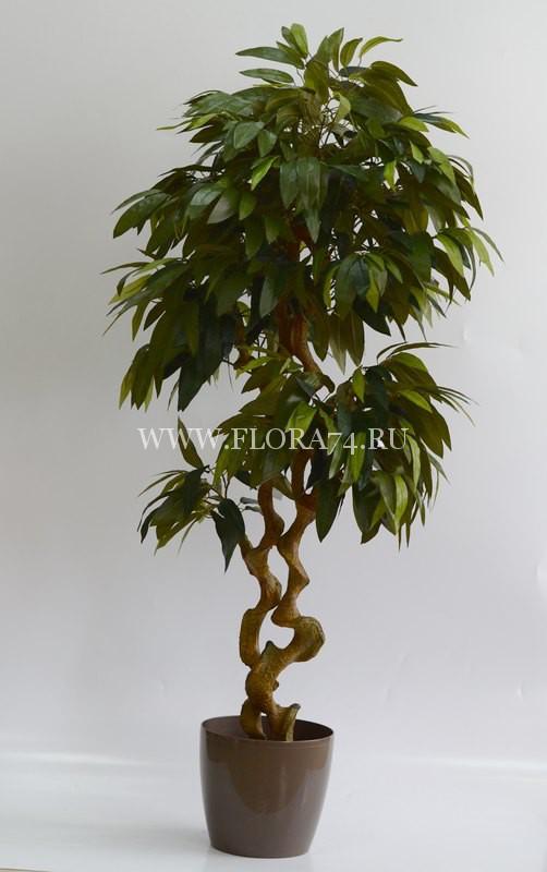 Дерево — Манго на искусственном стволе. Высота — 1.7 м.