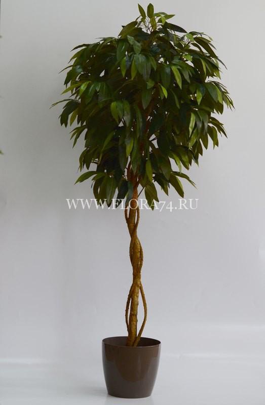 Дерево — Манго на искусственном стволе.Высота — 1,9 м.