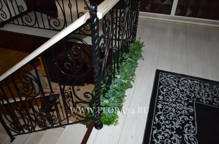 Растения для дома и офиса.