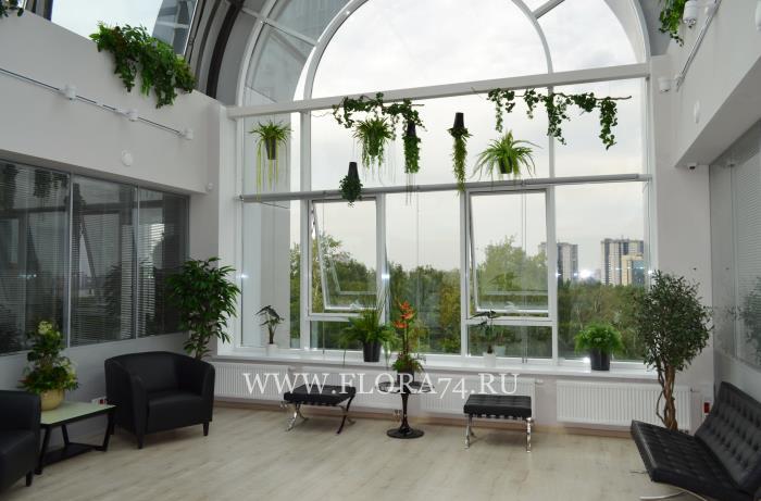 Искусственные декоративные растения.