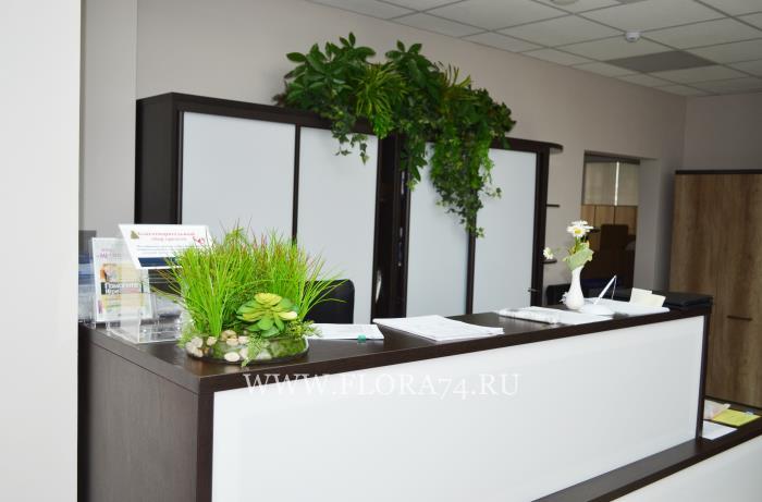 Декоративные растения для озеленения.
