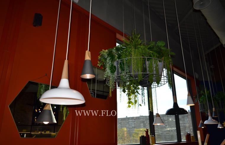 Декоративные цветы и растения.