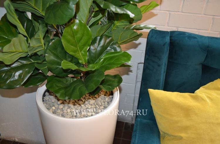 Искусственные растения для кафе.
