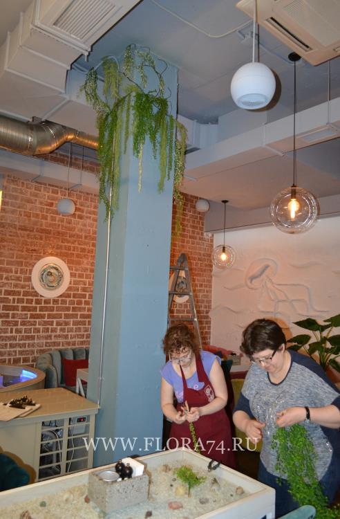 Декоративные водоросли.