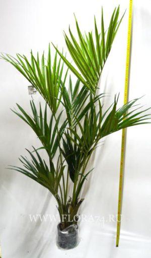 Искусственная пальма.