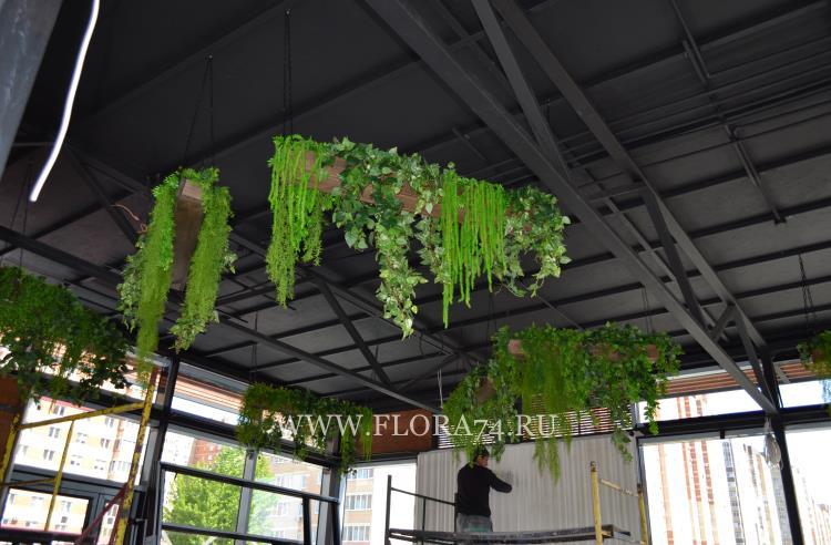 Декоративные ампельные растения.